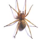 Spinne vs. Staubsauger: Hinweise für den ungleichen Kampf