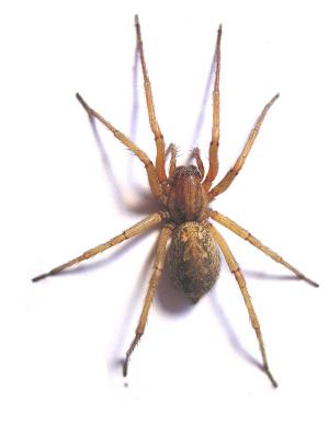 Spinnen Aufsaugen